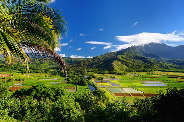 Hawaii May Become The First State To Help Farms Go Organic | The Huffington Post