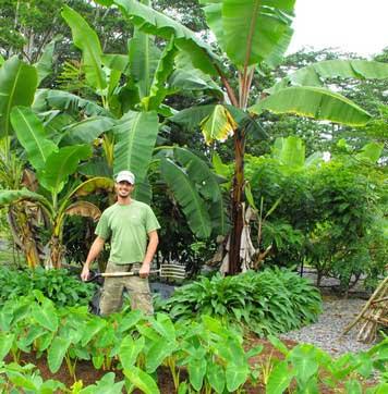 Nitrogen Fixers & Mulch Crops – Hawaiian Sanctuary