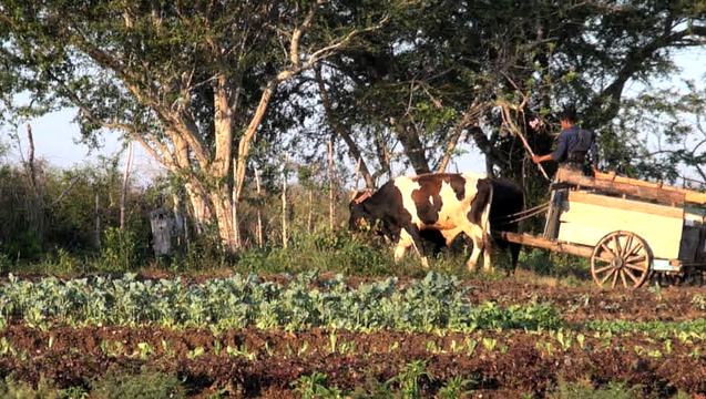 Organic Farming Flourishes in Cuba, But Can It Survive Entry of U.S. Agribusiness? | Democracy Now!